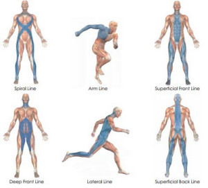 Elements of Myofascial Integration